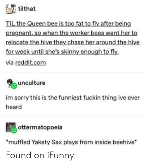 Skinny: tilthat  TIL the Queen bee is too fat to fly after being  pregnant, so when the worker bees want her to  relocate the hive they chase her around the hive  for week until she's skinny enough to fly  via reddit.com  unculture  im sorry this is the funniest fuckin thing ive ever  heard  ottermatopoeia  muffled Yakety Sax plays from inside beehive Found on iFunny