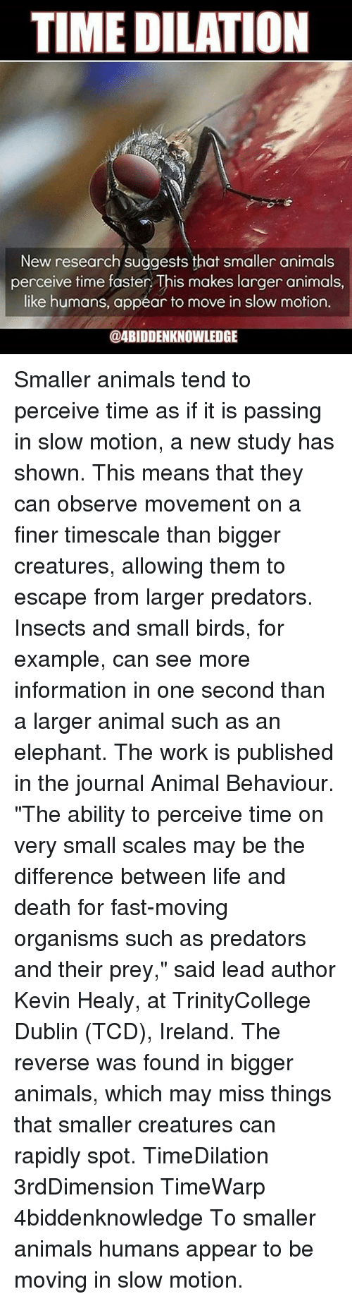 "Animals, Life, and Memes: TIME DILATION  New research suggests that smaller animals  perceive time faster. This makes larger animals,  like humans, appear to move in slow motion.  ODABIDDENKNOWLEDGE Smaller animals tend to perceive time as if it is passing in slow motion, a new study has shown. This means that they can observe movement on a finer timescale than bigger creatures, allowing them to escape from larger predators. Insects and small birds, for example, can see more information in one second than a larger animal such as an elephant. The work is published in the journal Animal Behaviour. ""The ability to perceive time on very small scales may be the difference between life and death for fast-moving organisms such as predators and their prey,"" said lead author Kevin Healy, at TrinityCollege Dublin (TCD), Ireland. The reverse was found in bigger animals, which may miss things that smaller creatures can rapidly spot. TimeDilation 3rdDimension TimeWarp 4biddenknowledge To smaller animals humans appear to be moving in slow motion."