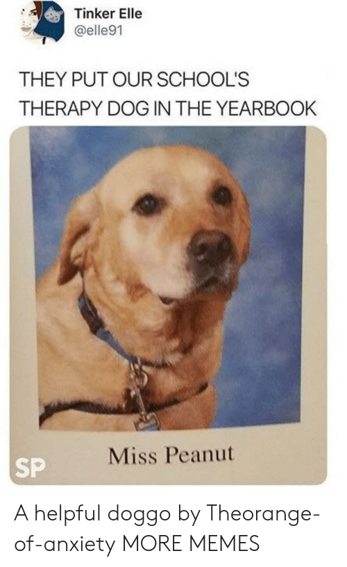 elle: Tinker Elle  @elle91  THEY PUT OUR SCHOOL'S  THERAPY DOG IN THE YEARBOOK  Miss Peanut  SP A helpful doggo by Theorange-of-anxiety MORE MEMES