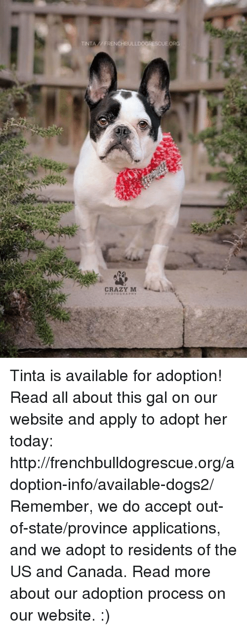 us-and-canada: TINTA FRENCHBULLDOGRESCUE ORG  CRAZY M Tinta is available for adoption! Read all about this gal on our website <location, likes, dislikes> and apply to adopt her today: http://frenchbulldogrescue.org/adoption-info/available-dogs2/  Remember, we do accept out-of-state/province applications, and we adopt to residents of the US and Canada. Read more about our adoption process on our website. :)