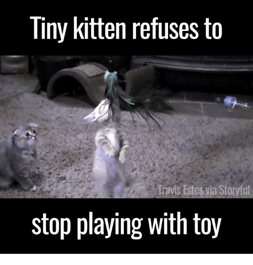 Memes, Kittens, and 🤖: Tiny kitten refuses to  ravis Estes vi  stop playing with toy