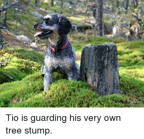 Tree, Own, and Stump