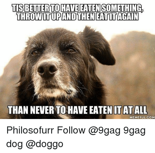 thn: TIS BETTER TOHAVE EATEN SOMETHING,  THROW IT UPAND THN EATITAGAIN  THAN NEVER TO HAVE EATEN LTAT ALL  MEMEFUL.COM Philosofurr Follow @9gag 9gag dog @doggo