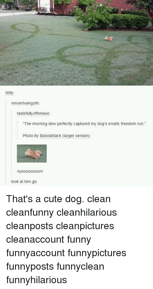 "Freedomed: tittily:  vincentvangoth:  tastefullyoffensive:  ""The morning dew perfectly captured my dog's erratic freedom run.""  Photo by Babolattack (larger version)  nyo0000000m  look at him go That's a cute dog. clean cleanfunny cleanhilarious cleanposts cleanpictures cleanaccount funny funnyaccount funnypictures funnyposts funnyclean funnyhilarious"