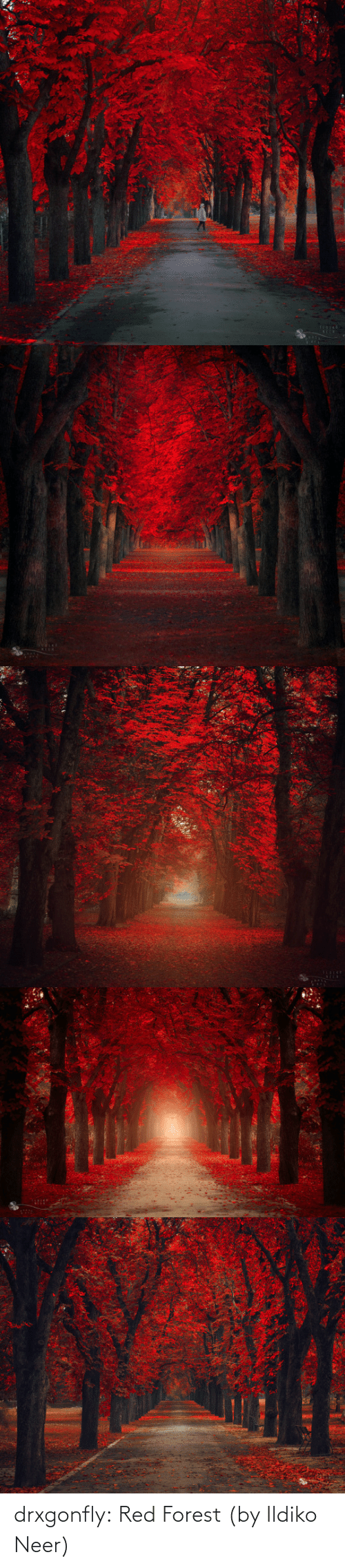 Neer: TLEICE drxgonfly:  Red Forest (by  Ildiko Neer)