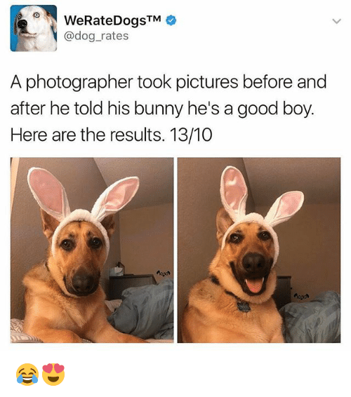 Memes, Good, and Pictures: TM  @dog rates  A photographer took pictures before and  after he told his bunny he's a good boy.  Here are the results. 13/10 😂😍