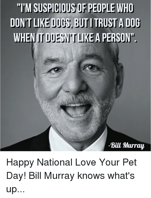 """Love, Memes, and Bill Murray: """"TMSUSPICIOUSOF PEOPLE WHO  DONTLIKEDUthy, D  WHENITD  A PERSON  -Bill Murray Happy National Love Your Pet Day! Bill Murray knows what's up..."""
