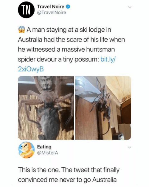 Possum: TN  Travel Noire  @TravelNoire  A man staying at a ski lodge in  Australia had the scare of his life when  he witnessed a massive huntsman  spider devour a tiny possum: bit.ly/  2xiOwyB  Eating  @MisterA  This is the one. The tweet that finally  convinced me never to go Australia