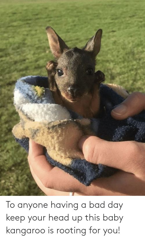 keep your head up: To anyone having a bad day keep your head up this baby kangaroo is rooting for you!