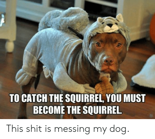 messing: TO CATCH THE SQUIRREL, YOU MUST  BECOME THE SQUIRREL. This shit is messing my dog.