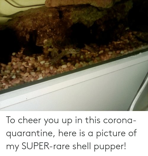 You Up: To cheer you up in this corona-quarantine, here is a picture of my SUPER-rare shell pupper!
