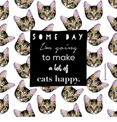 Cats, Memes, and Happy: to make  cats happy.