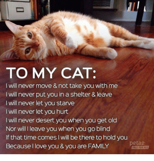 Family, Love, and Memes: TO MY CAT:  I will never move & not take you with me  I will never put you in a shelter & leave  I will never let you starve  I will never let you hurt  I will never desert you when you get old  Nor will I leave you when you go blind  If that time comes I will be there to hold you  Because I love you & you are FAMILY  peta2  FREE FOR A
