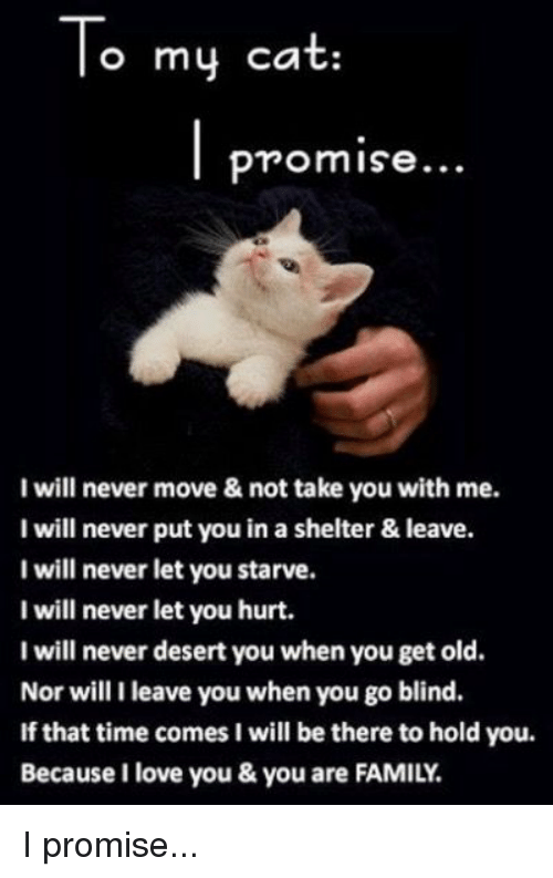 Memes, 🤖, and Desert: To my cat  promise...  I will never move & not take you with me.  I will never put you in a shelter & leave.  I will never let you starve.  I will never let you hurt.  I will never desert you when you get old.  Nor will I leave you when you go blind.  If that time comes I will be there to hold you.  Because I love you & you are FAMILY. I promise...