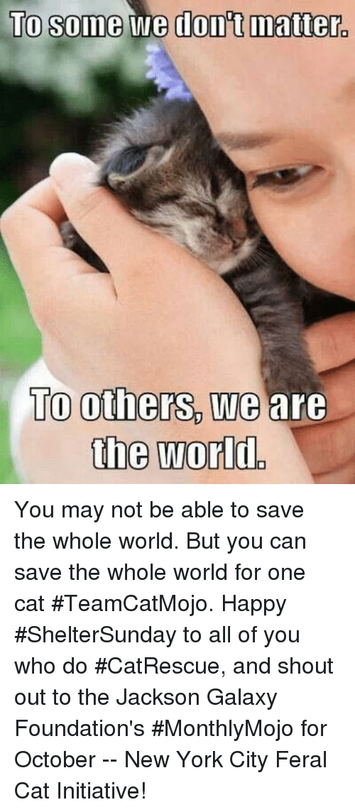 Cats, Jackson Galaxy, and Memes: TO some We dont matter.  TO others We are  the World You may not be able to save the whole world.  But you can save the whole world for one cat #TeamCatMojo.  Happy #ShelterSunday to all of you who do #CatRescue, and shout out to the Jackson Galaxy Foundation's #MonthlyMojo for October -- New York City Feral Cat Initiative!