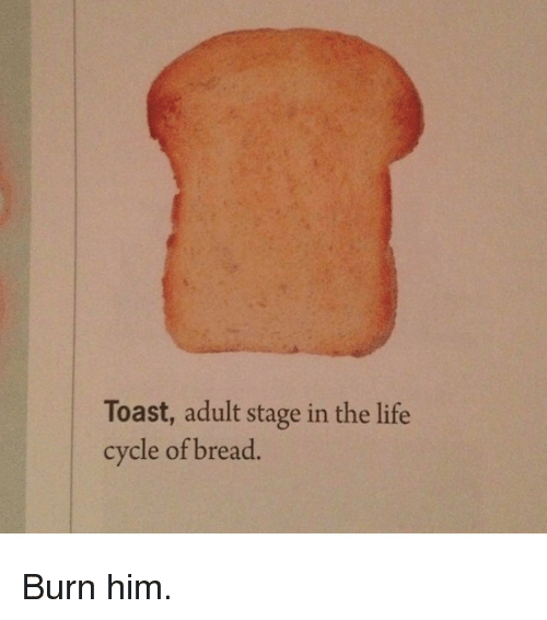 Funny: Toast, adult stage in the life  cycle of bread Burn him.