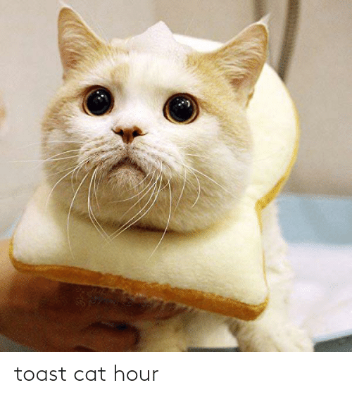 Toast, Cat, and Toast Cat: toast cat hour