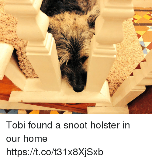 tobi: Tobi found a snoot holster in our home https://t.co/t31x8XjSxb