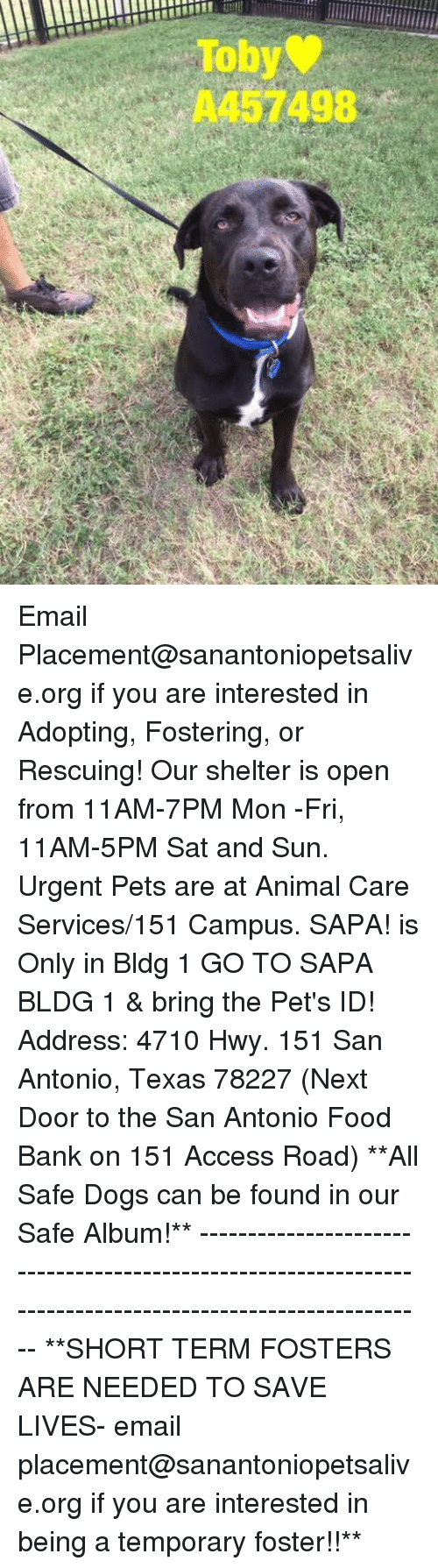 Dogs, Food, and Memes: Toby  A457498 Email Placement@sanantoniopetsalive.org if you are interested in Adopting, Fostering, or Rescuing!  Our shelter is open from 11AM-7PM Mon -Fri, 11AM-5PM Sat and Sun.  Urgent Pets are at Animal Care Services/151 Campus. SAPA! is Only in Bldg 1 GO TO SAPA BLDG 1 & bring the Pet's ID! Address: 4710 Hwy. 151 San Antonio, Texas 78227 (Next Door to the San Antonio Food Bank on 151 Access Road)  **All Safe Dogs can be found in our Safe Album!** ---------------------------------------------------------------------------------------------------------- **SHORT TERM FOSTERS ARE NEEDED TO SAVE LIVES- email placement@sanantoniopetsalive.org if you are interested in being a temporary foster!!**