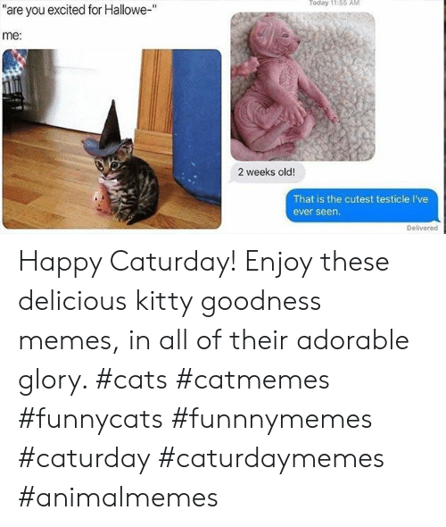 """glory: Today 11:55 AM  """"are you excited for Hallowe-""""  me:  2 weeks old!  That is the cutest testicle I've  ever seen.  Delivered Happy Caturday! Enjoy these delicious kitty goodness memes, in all of their adorable glory. #cats #catmemes #funnycats #funnnymemes #caturday #caturdaymemes #animalmemes"""