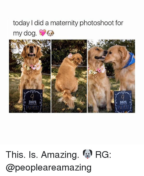 Girl, Dogging, and  Photoshootings: today did a maternity photoshoot for  my dog.  DAYS  DAYS  BUNTILE  HUNTELE This. Is. Amazing. 🐶 RG: @peopleareamazing