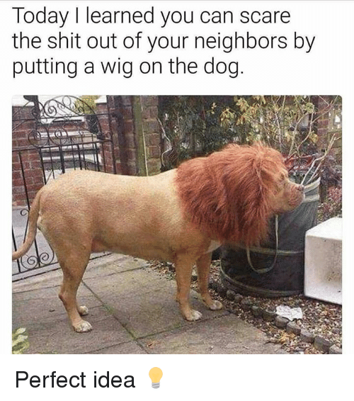 Scare, Shit, and Neighbors: Today I learned you can scare  the shit out of your neighbors by  putting a wig on the dog. Perfect idea 💡