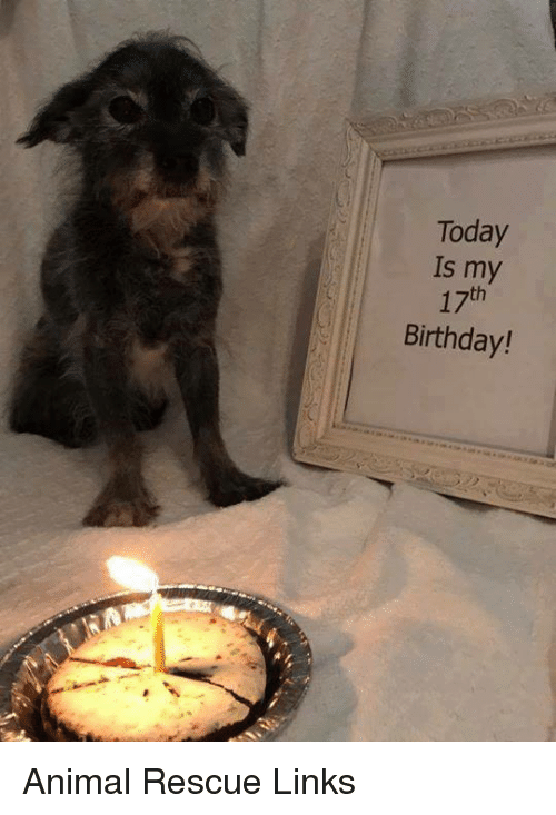 17Th Birthday: Today  Is my  17th  Birthday! Animal Rescue Links