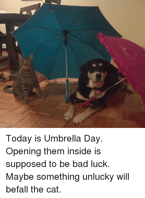 Unluckiness: Today is Umbrella Day. Opening them inside is supposed to be bad luck. Maybe something unlucky will befall the cat.
