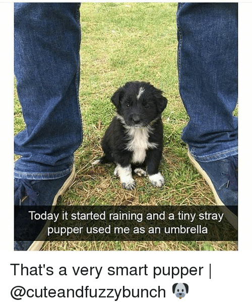 Memes, Today, and 🤖: Today it started raining and a tiny stray  pupper used me as an umbrella That's a very smart pupper | @cuteandfuzzybunch 🐶