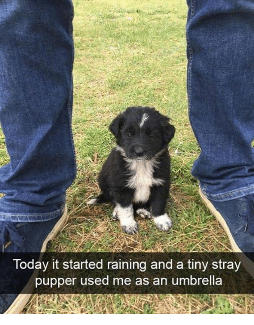 raining: Today it started raining and a tiny stray  pupper used me as an umbrella