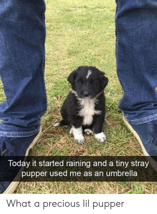 raining: Today it started raining and a tiny stray  pupper used me as an umbrella What a precious lil pupper