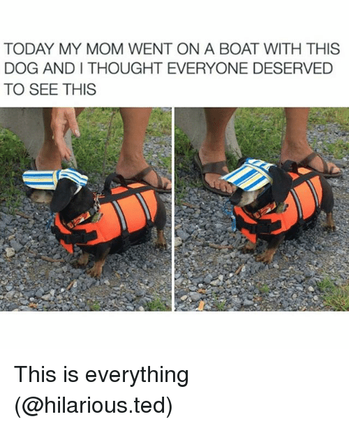 andie: TODAY MY MOM WENT ON A BOAT WITH THIS  DOG ANDI THOUGHT EVERYONE DESERVED  TO SEE THIS This is everything (@hilarious.ted)