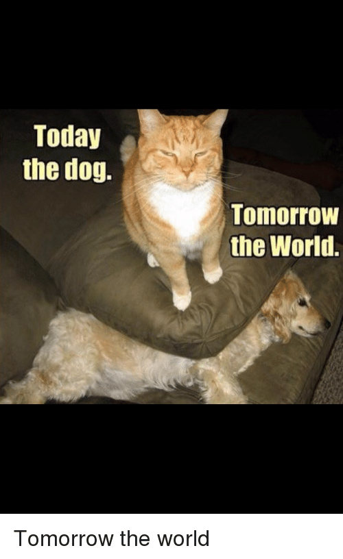 Today, Tomorrow, and World: Today  the dog.  Tomorrow  the World. Tomorrow the world