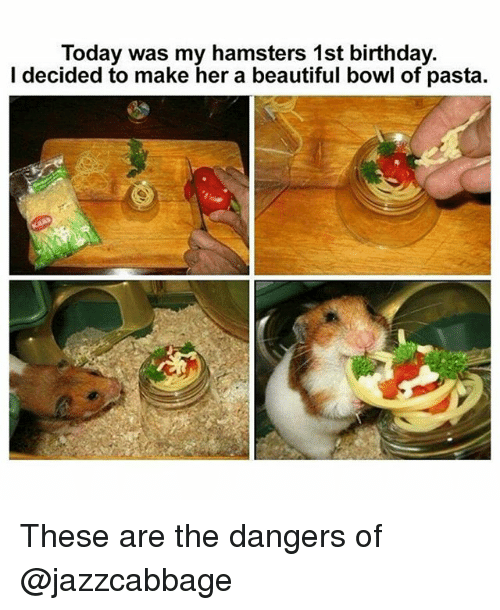 Beautiful, Birthday, and Memes: Today was my hamsters 1st birthday.  I decided to make her a beautiful bowl of pasta. These are the dangers of @jazzcabbage