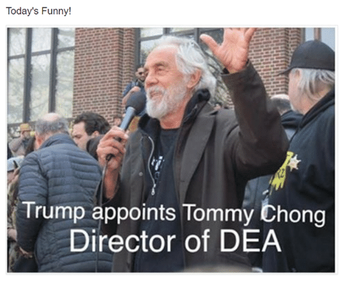 todays funny trump appoints tommy chong director of dea 9874094 🅱 25 best memes about today funny today funny memes