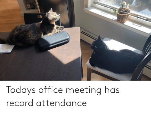 Attendance: Todays office meeting has record attendance