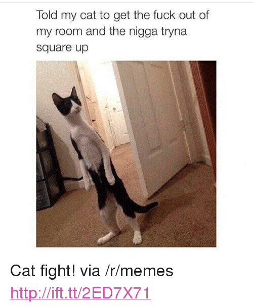 """Memes, Square Up, and Fuck: Told my cat to get the fuck out of  my room and the nigga tryna  square up <p>Cat fight! via /r/memes <a href=""""http://ift.tt/2ED7X71"""">http://ift.tt/2ED7X71</a></p>"""