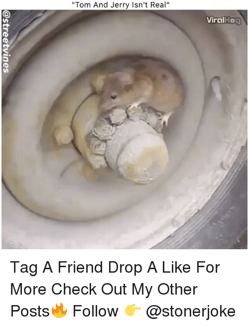 """Memes, Tom and Jerry, and 🤖: """"Tom And Jerry Isn't Real""""  ViralHo0 Tag A Friend Drop A Like For More Check Out My Other Posts🔥 Follow 👉 @stonerjoke"""