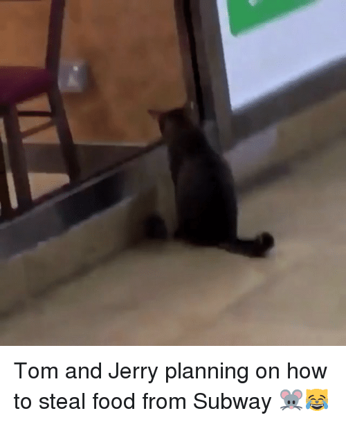 stealing food: Tom and Jerry planning on how to steal food from Subway 🐭😹