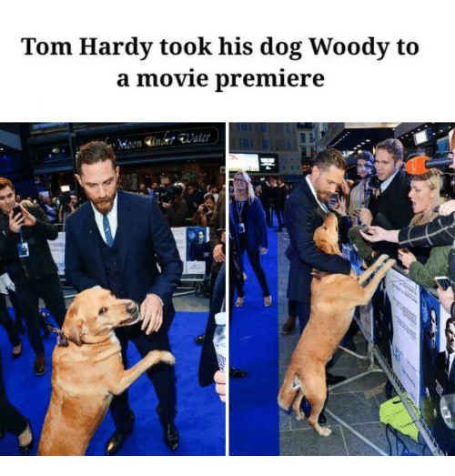 Dogs, Movies, and Tom Hardy: Tom Hardy took his dog Woody to  a movie premiere