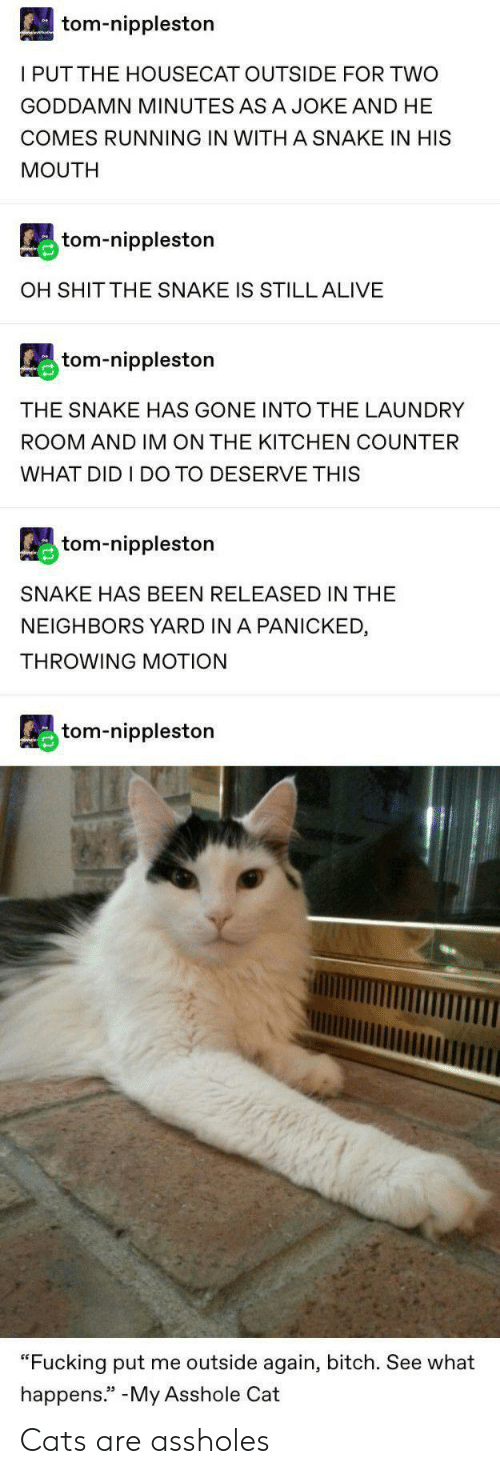 """the neighbors: tom-nippleston  I PUTTHE HOUSECAT OUTSIDE FOR TWO  GODDAMN MINUTES ASA JOKE AND HE  COMES RUNNING IN WITH A SNAKE IN HIS  MOUTH  tom-nippleston  OH SHIT THE SNAKE IS STILL ALIVE  tom-nippleston  THE SNAKE HAS GONE INTO THE LAUNDRY  ROOM AND IM ON THE KITCHEN COUNTER  WHAT DID I DO TO DESERVE THIS  tom-nippleston  SNAKE HAS BEEN RELEASED IN THE  NEIGHBORS YARD IN A PANICKED  THROWING MOTION  tom-nippleston  """"Fucking put me outside again, bitch. See what  happens."""" -My Asshole Cat Cats are assholes"""