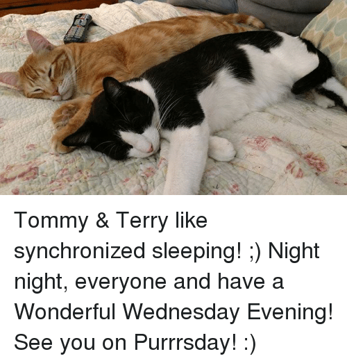 Have A Wonderful Wednesday: Tommy & Terry like synchronized sleeping! ;) Night night, everyone and have a Wonderful Wednesday Evening! See you on Purrrsday! :)