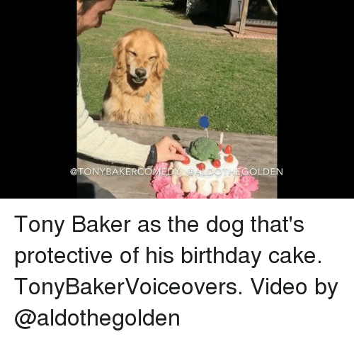 Birthday, Memes, and Cake: @TONY BA  GOLD Tony Baker as the dog that's protective of his birthday cake. TonyBakerVoiceovers. Video by @aldothegolden