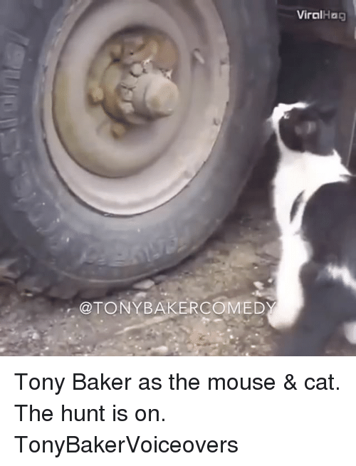 mouses: @TONY BAKER COMED  Viral Hag Tony Baker as the mouse & cat. The hunt is on. TonyBakerVoiceovers