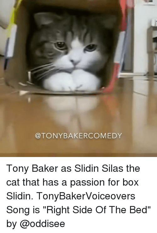"""Memes, Comedy, and 🤖: @TONY BAKER COMEDY Tony Baker as Slidin Silas the cat that has a passion for box Slidin. TonyBakerVoiceovers Song is """"Right Side Of The Bed"""" by @oddisee"""
