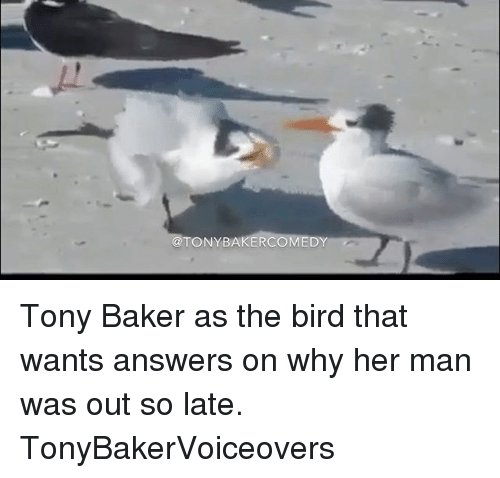 Ðÿ': TONY BAKER  DY Tony Baker as the bird that wants answers on why her man was out so late. TonyBakerVoiceovers
