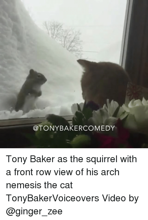 Cats, Memes, and Videos: TONY BAKERCOMEDY Tony Baker as the squirrel with a front row view of his arch nemesis the cat TonyBakerVoiceovers Video by @ginger_zee