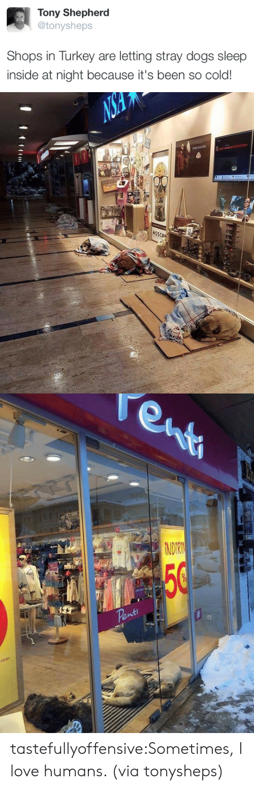 stray dogs: Tony Shepherd  @tonysheps  Shops in Turkey are letting stray dogs sleep  inside at night because it's been so cold!   NS  MAYBACH  4  MOSCOE   enti  TA  NDIRN  50  Penti  varan tastefullyoffensive:Sometimes, I love humans. (via tonysheps)