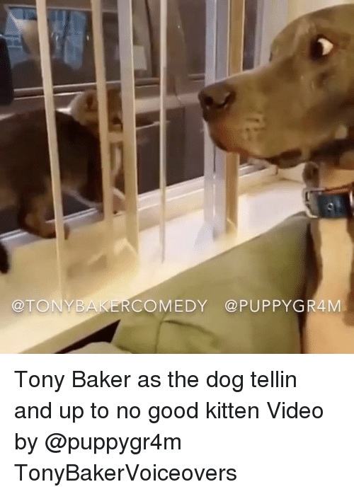 Up To No Good: @TONYB  COMEDY @PUPPYGR4M Tony Baker as the dog tellin and up to no good kitten Video by @puppygr4m TonyBakerVoiceovers