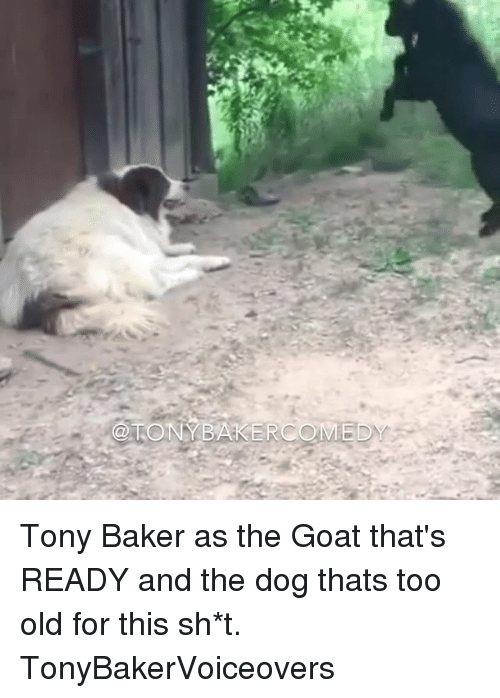Memes, Goat, and Old: @TONYBAKERCOMED Tony Baker as the Goat that's READY and the dog thats too old for this sh*t. TonyBakerVoiceovers